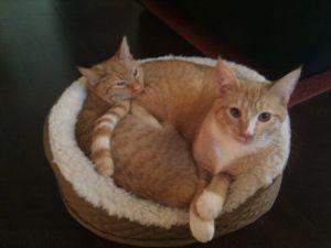 01 10 Cuddled together