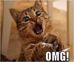 excited-cat