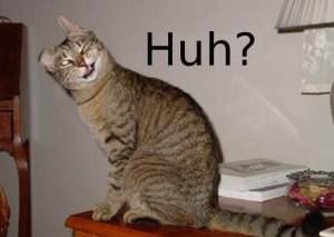 confused-cat-huh-e1438626439258